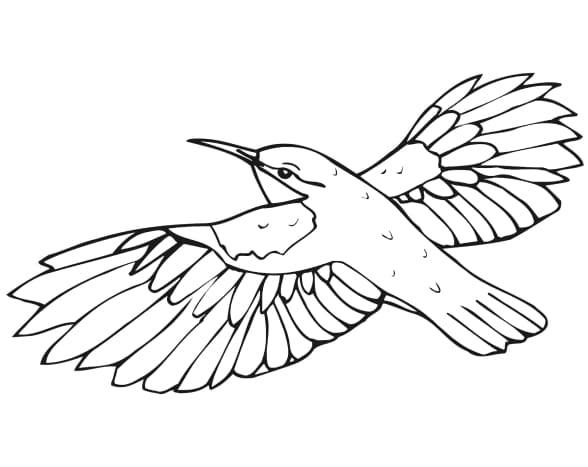 Раскраски Птиц - Распечатать или скачать бесплатно