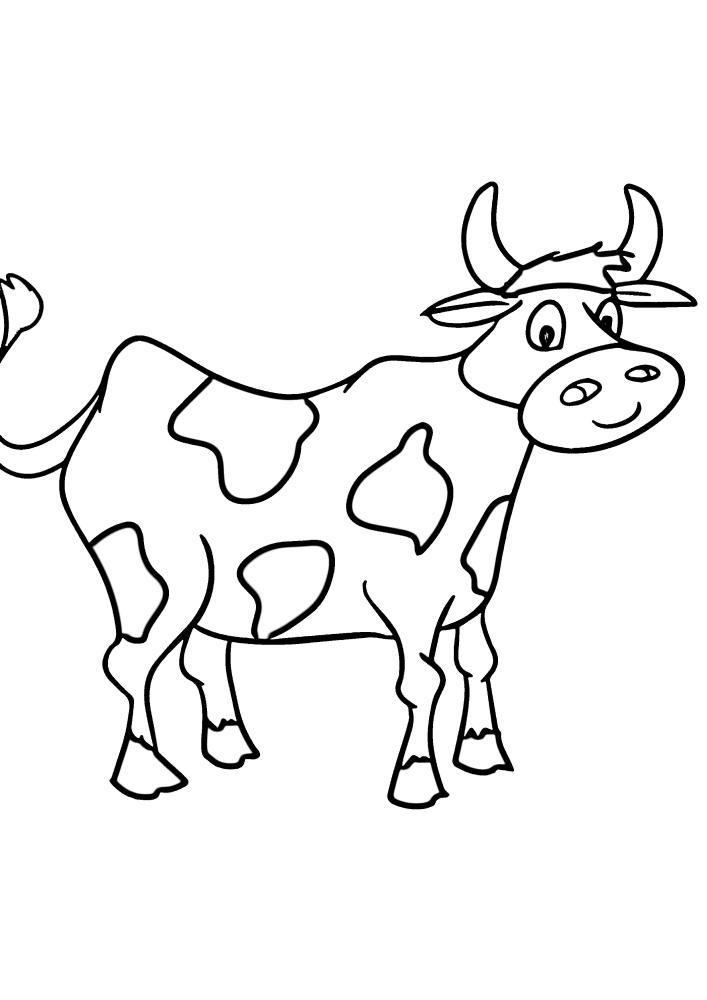 Коровам свойственны пятна на теле