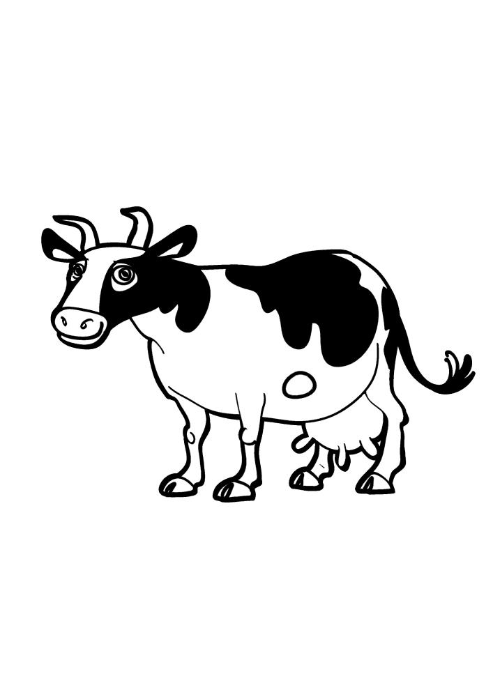 Чёрно-белое домашнее животное