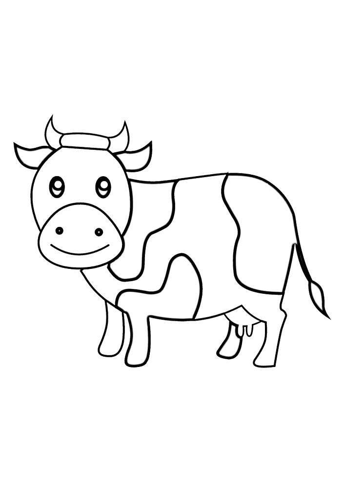Корова смотрит прямо на Вас