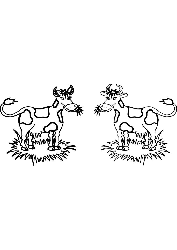 Две коровы жуют траву и смотрят друг на друга