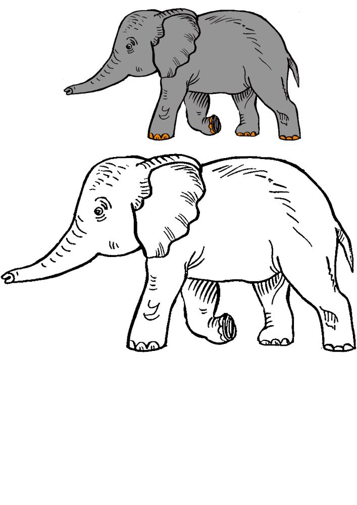 Идущий слон - раскраска с образцом разукрашивания для знакомства с этим животным.
