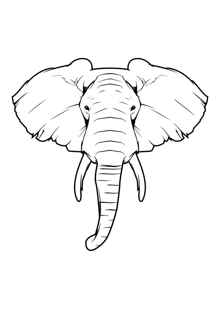 Мордочка слона