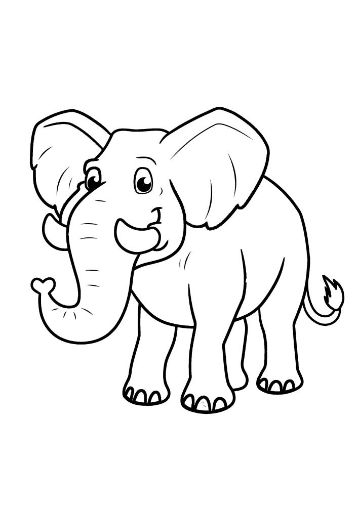 Слон с милыми глазами