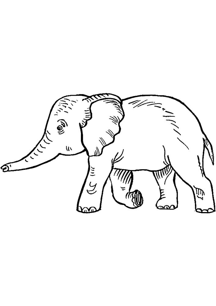 Маленький Индийский слон