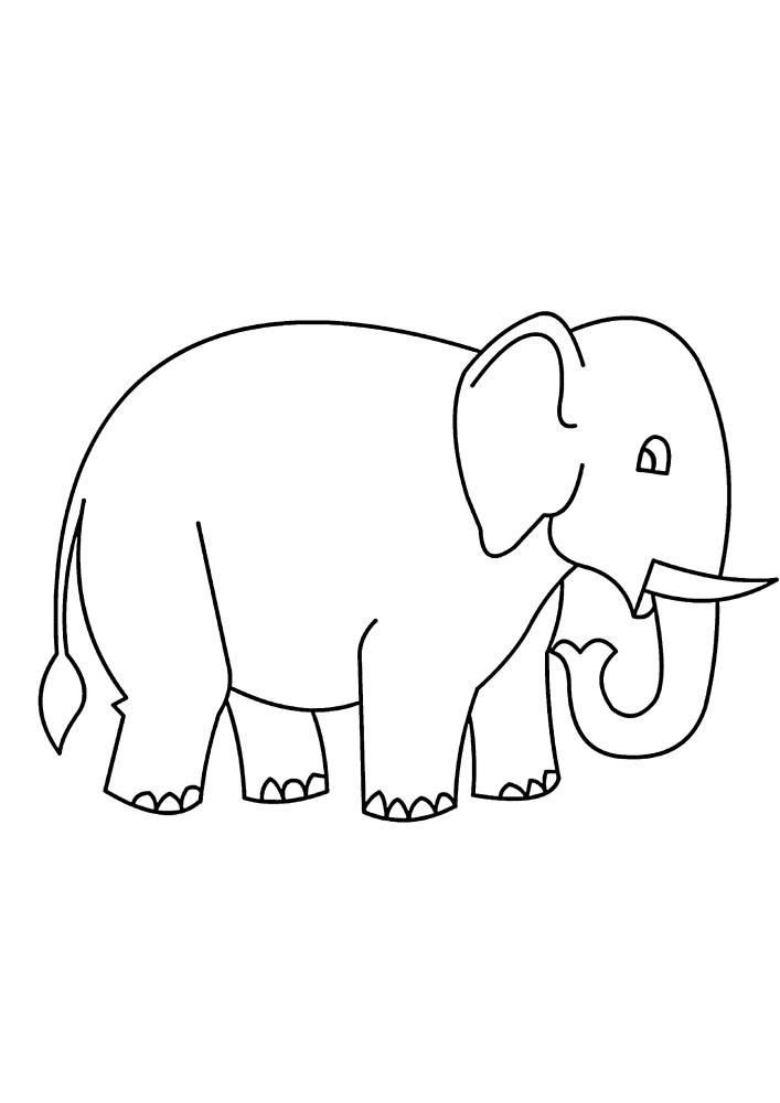 Познакомьтесь - это слон!