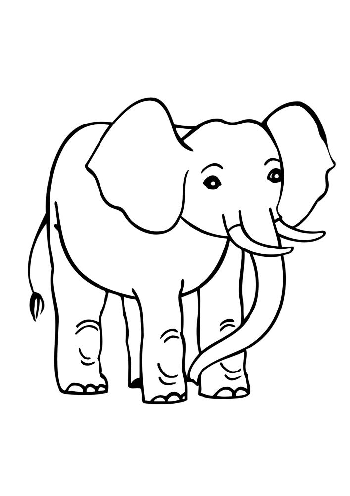 Милый слон - чёрно-белое изображение для детей
