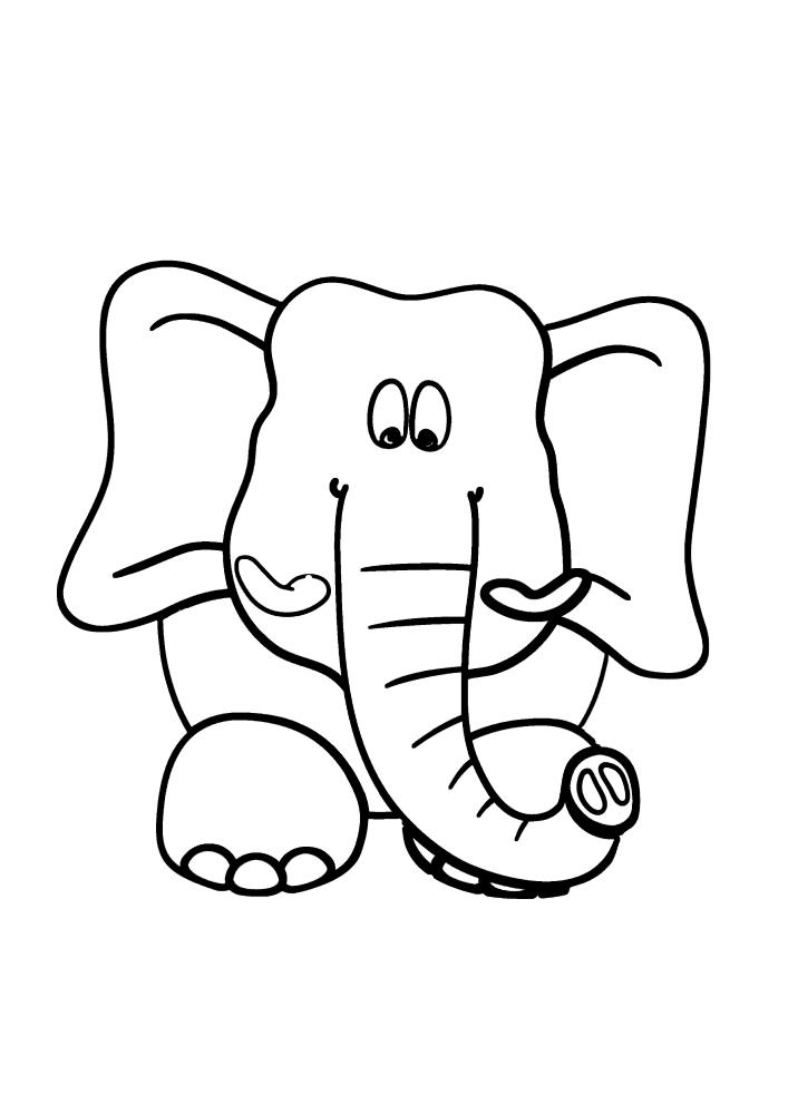 Вид на милого слона спереди