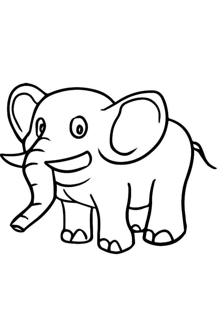 Красивый слонёнок