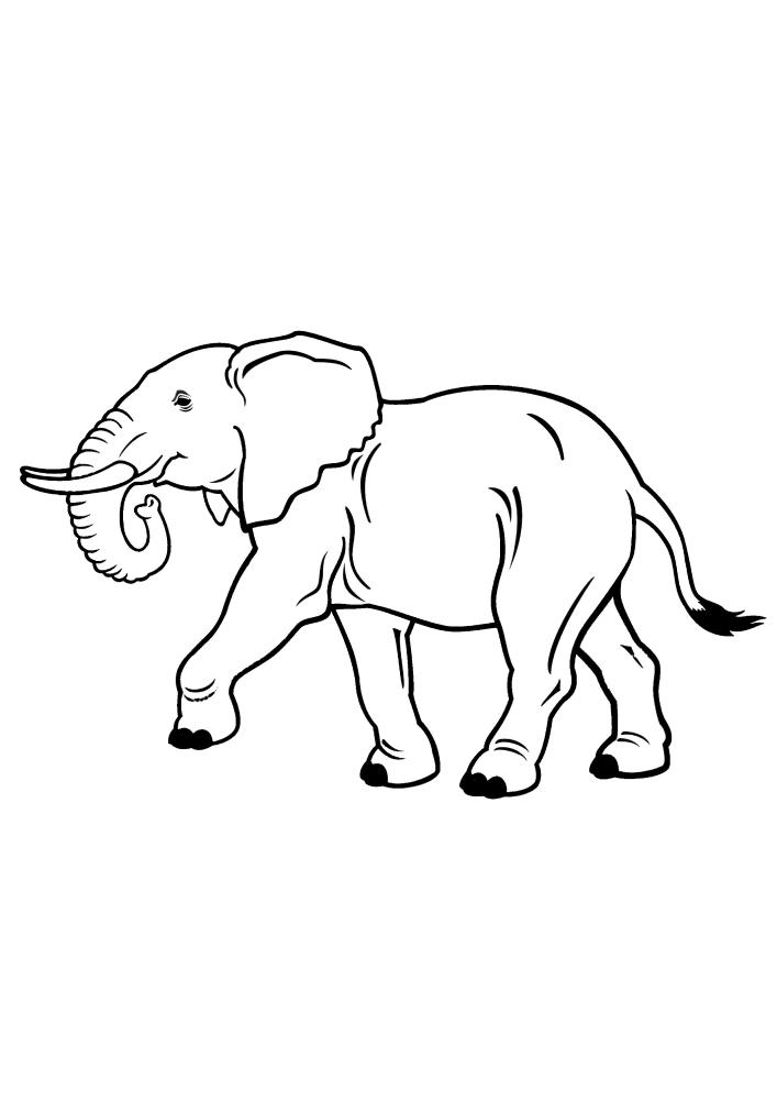 Гордо идущий слон - раскраска
