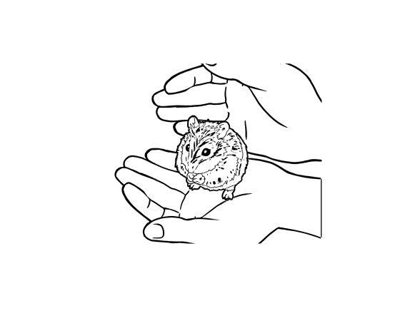 Coloriage Hamster. 115 images en noir et blanc sont la plus grande collection. Vous pouvez imprimer ou télécharger gratuitement chez nous.