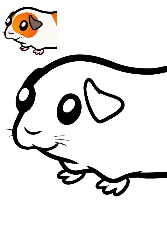 Морская свинка - раскраска с образцом разукрашивания