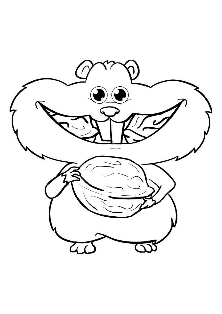 Хомяк грызет орех