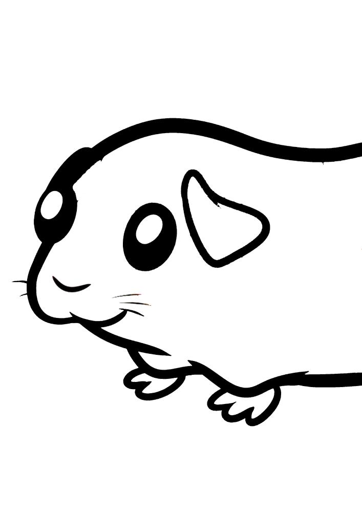 Милая морская  свинка - раскраска