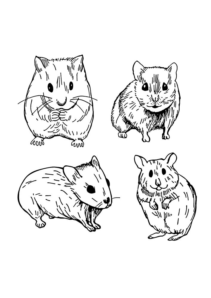 Разные изображения хомяка - раскраска нескольких вариантов