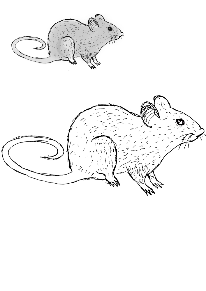 Мышь - раскраска с образцом разукрашивания