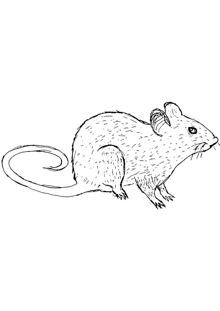 Мышь - раскраска