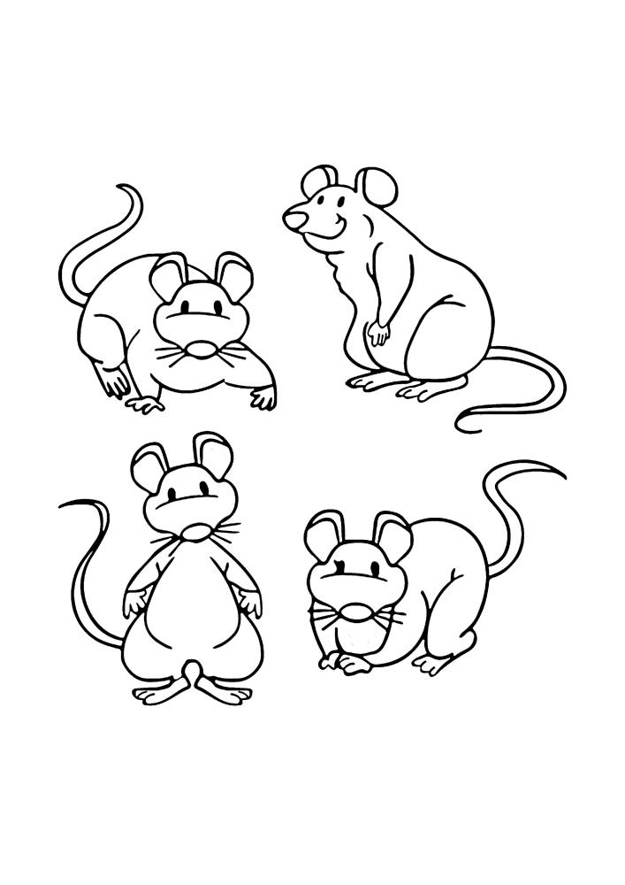 Четыре разные позы грызуна.