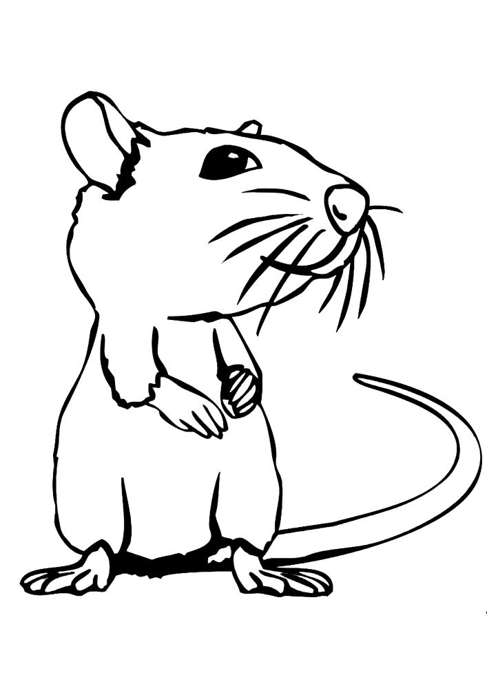 Мышь с усами