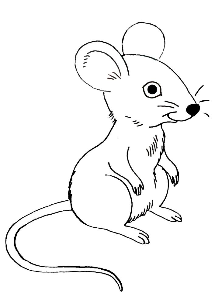 Мышка присела отдохнуть