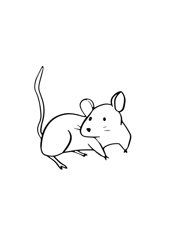 Мышка оглядывается назад - это очень пугливые животные