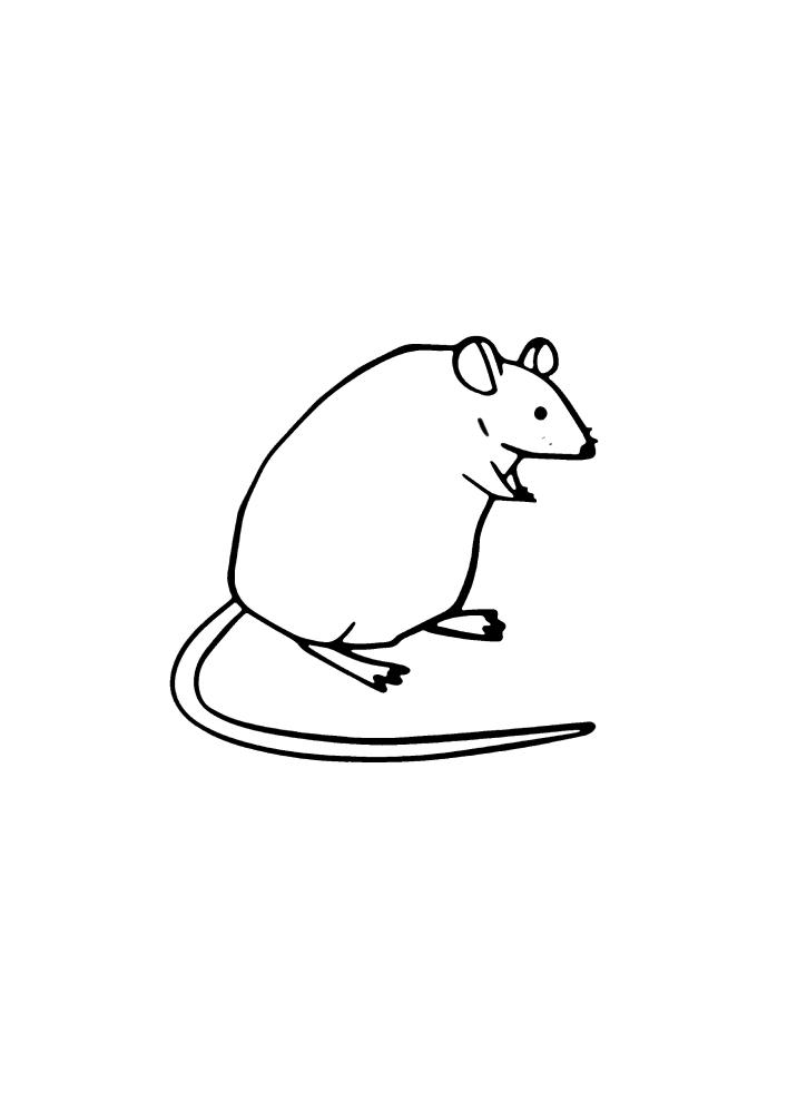 Толстая маленькая мышь